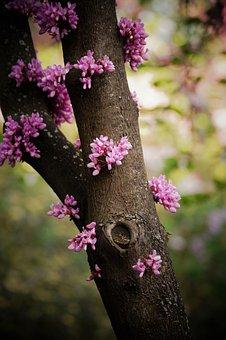 Tree, Flowers, Retiro Madrid, Park, Spain, Retirement