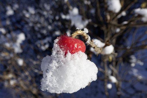 Rose Hip, Rosa Canina, Fruit, Red, Wild Rose, Nature