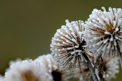 Winter, Hoarfrost, On Frozen, Shrubs