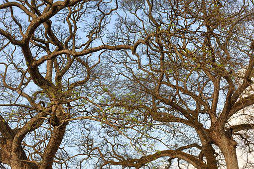 The Dry Tree, Autumn, Sky, Green, Twigs, Dry Leaves