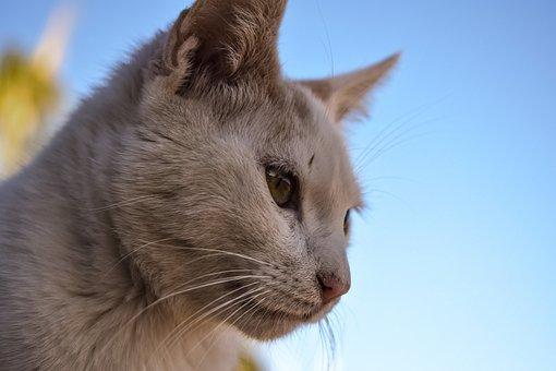 Cat, Stray, Animal, Cute, Face, Eyes, Street, Portrait