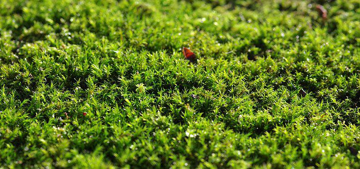 Moss, Green, The Background, Substrate, Forest