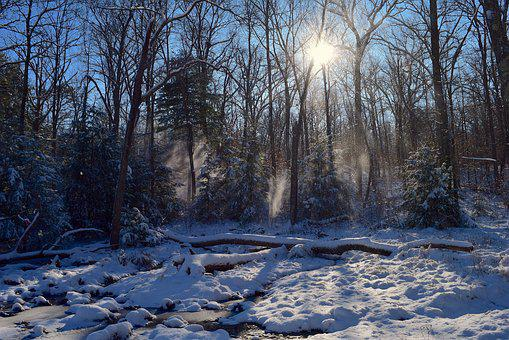 Snow, Trees, Sun, Forest, Sunrise, Winter, Landscape