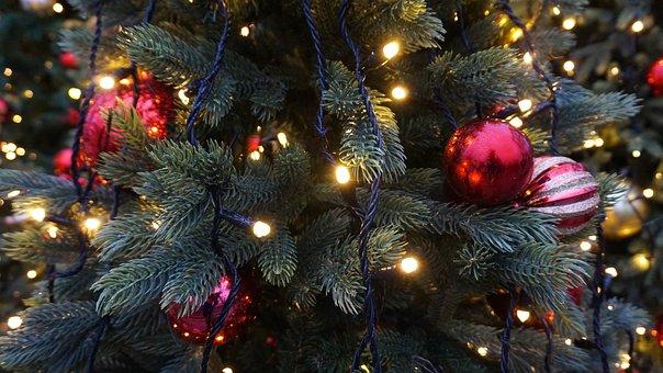 Christmas, Tree, Christmas Tree, Holiday