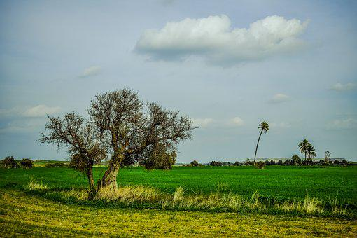 Landscape, Tree, Grass, Field, Nature, Agriculture
