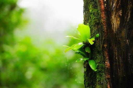 Fern, Plant, Green, Wild, Weeds, Parasitic Plants