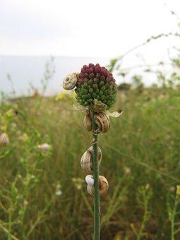 Snails, Wild Garlic, Gastropod, Nature