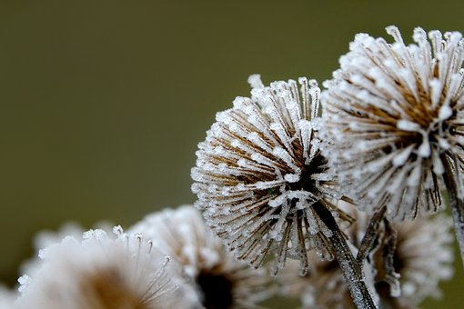 Winter, Hoarfrost, On Frozen, Shrubs