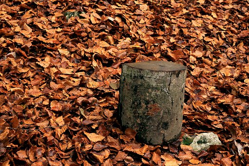 Leaves, Autumn, Dry Leaf, Forest, Tree, Yellow Sheet