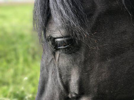 Horses, Andalusians, Pferdeportrait, Close, View, Eye