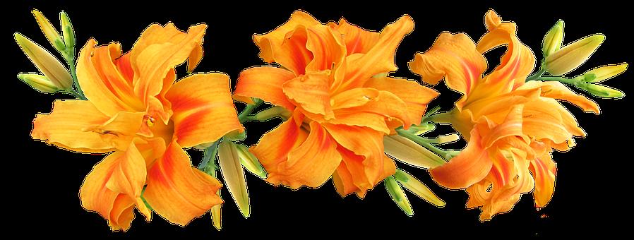 Day Lilies, Flowers, Arrangement, Summer