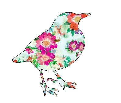 Bird, Blackbird, Floral, Pattern, Design, Art