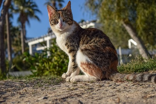 Cat, Stray, Nature, Animal, Outdoors, Cute, Young