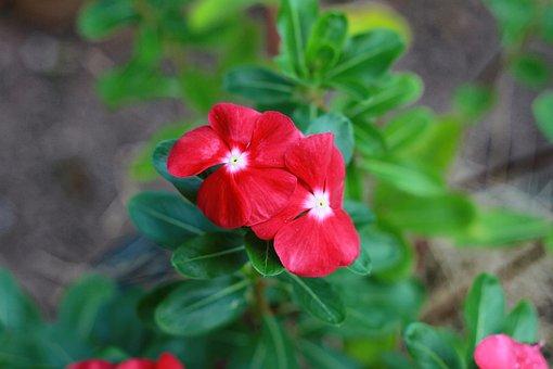 Flower, Nature, Flora, Leaf, Garden, Wood, Yellow