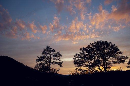 Tree, Panoramic, Nature, Sunset, Landscape, Dawn, Sky