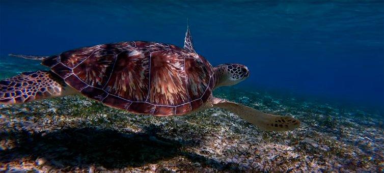 Sea, Body Of Water, Nature, Ocean, Turtle