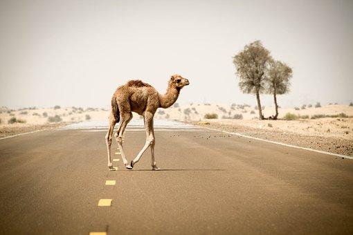 Sand, Desert, Travel, Camel, Nature