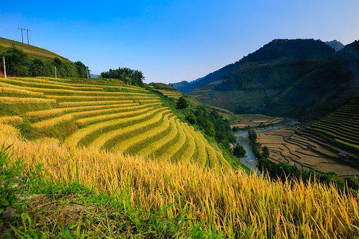 Vietnam, Rice, Rice Field, Ha Giang, Step, Hoang Su Phi