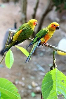 Parrot, Bird, Colorful, Nature, Tropical, Tree, Wings