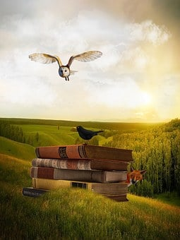 Owl, Books, Blackbird, Landscape, Fuchs, Sun