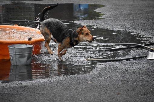 Wet, Outdoors, Dog