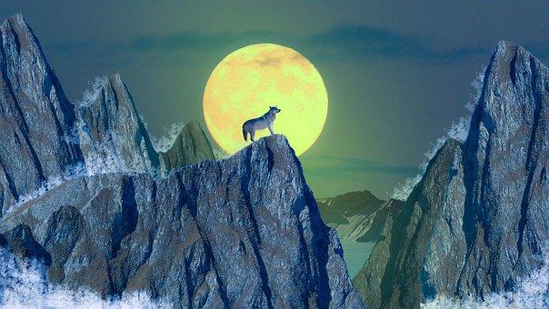 Wolf, Moon, Mountain, Animal, Wild, Nature, Night
