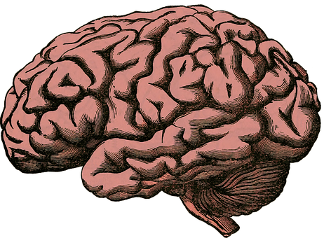 Brain, Anatomy, Human, Science, Health, Medical, Organ