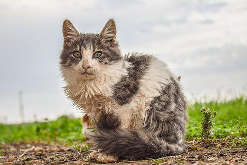 Cat, Animal, Homeless, Nature, Mammal, Cute, Stray