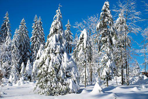 Wintry, Christmas Landscape, Winter, Snow, Cold, Firs