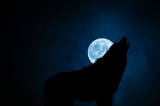 Wolf, Wolves, Dog, Lupine, Canine, Canis, Lupus, Lobo