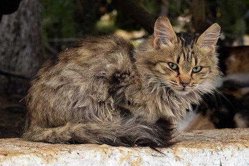 Animal, Cat, Mammal, Nature, Cute, Stray, Suspicious