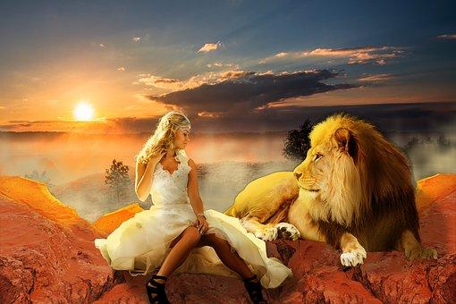 Lion, Animal, Jungle, Wildlife, Wild, Nature, Zoo
