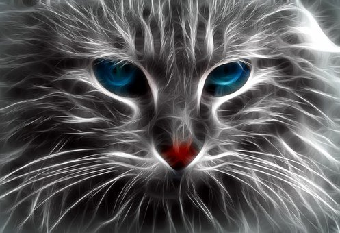 Cat, Blue Eyes, Feline, Pet, Animal, Blue, Gata