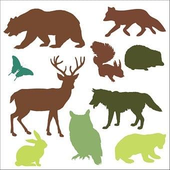 Woodland Animals, Animals, Bear, Bear Cub, Fox