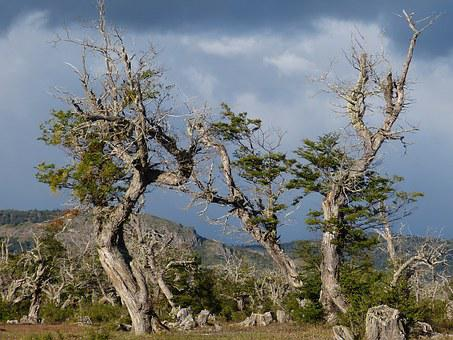 Chile, South America, Nature, Landscape, Patagonia