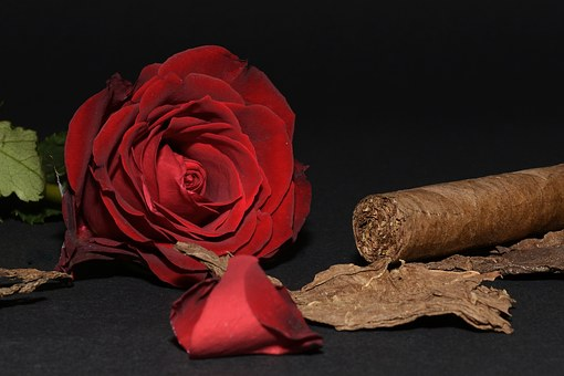 Rose, Red Rose, Cigar, Tobacco Leaves, Rose Petals