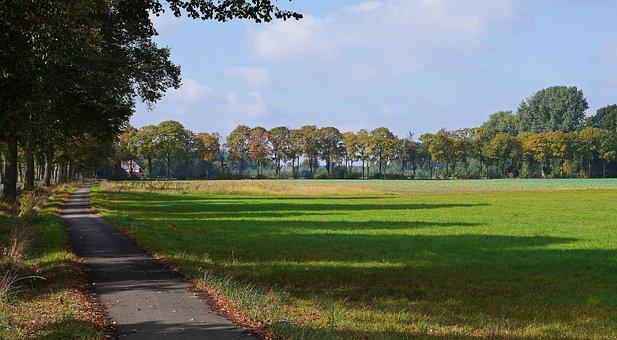 Autumn Landscape, Shadow, Emerge, Colorful, Avenue