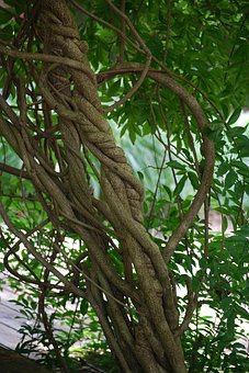 Entwined, Braid, Sculpture, Vines, Trees, Nature