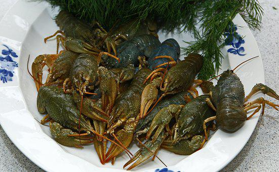 Crayfish, Seafood, Live, Boil, Dill, Swedish, Food