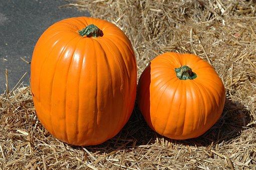 Pumpkin, Pumpkin Farm, Halloween, Autumn, Fall, Harvest