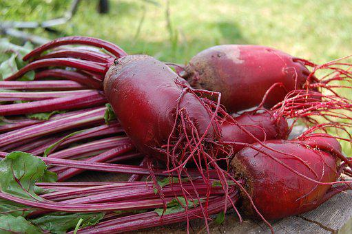 Beet, Plant, Red, Vegetable, From The Garden, Haulm