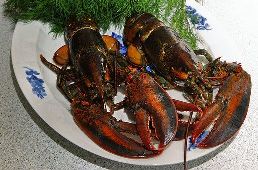 Lobster, Danish Lobster, Limfjord Lobster, Black Hummer
