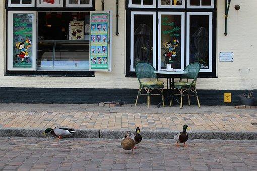 Mallard, Mätzente, Ducks