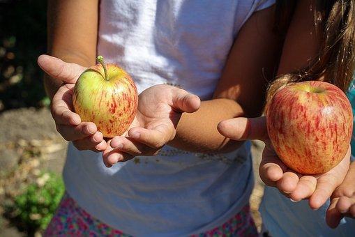 Apple, Picking, Children, Hands, Fruit, Nature, Garden