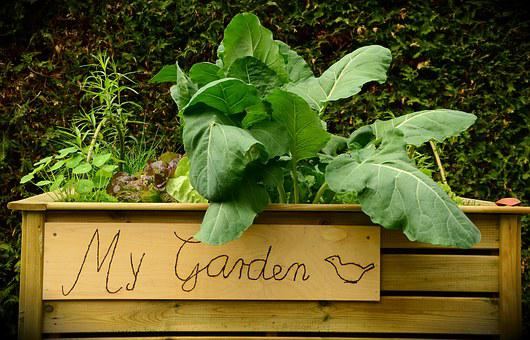 Garden, Raised Bed, Bed, Plant