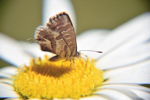 Butterfly, Macro, Small Butterfly, Butterfly On Flower
