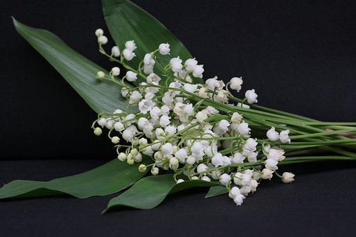Thrush, May 1, Flower, Bell, Spring