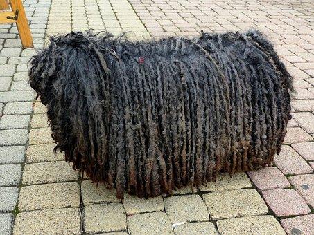 Dog, Rasta Braids, Shaggy, Mop, Stool, Black, Are