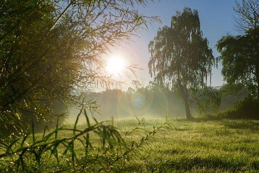 Autumn, Summer, Nature, Tree, Sun, Sunrise, Sunset