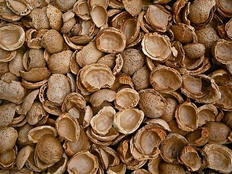 Almonds, Shells, Empty, Cracked, Nature, Texture